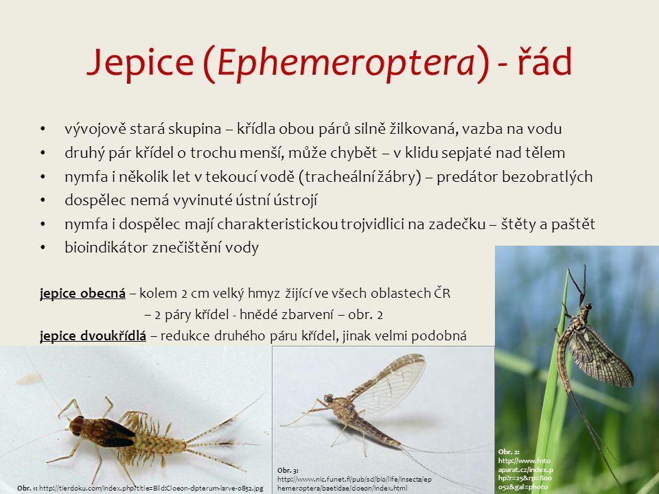 Jepice (Ephemeroptera) - řád vývojově stará skupina – křídla obou párů silně žilkovaná, vazba na vodu druhý pár křídel o trochu menší, může chybět – v klidu sepjaté nad tělem nymfa i několik let v tekoucí vodě (tracheální žábry) – predátor bezobratlých dospělec nemá vyvinuté ústní ústrojí nymfa i dospělec mají charakteristickou trojvidlici na zadečku – štěty a paštět bioindikátor znečištění vody jepice obecná – kolem 2 cm velký hmyz žijící ve všech oblastech ČR – 2 páry křídel - hnědé zbarvení – obr.