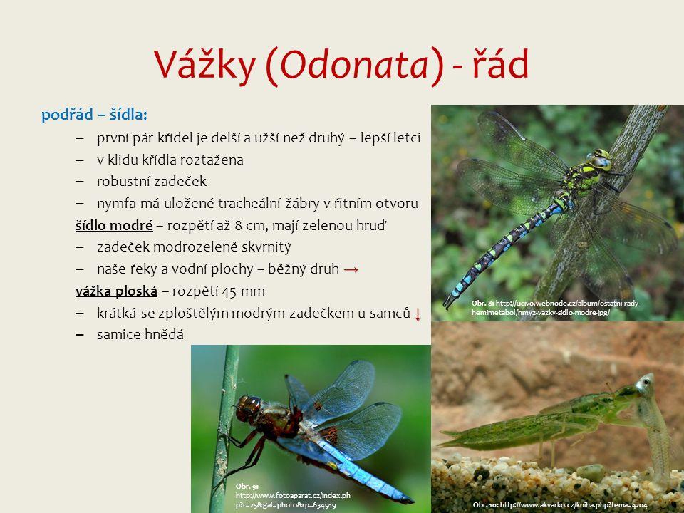 Vážky (Odonata) - řád podřád – šídla: – první pár křídel je delší a užší než druhý – lepší letci – v klidu křídla roztažena – robustní zadeček – nymfa má uložené tracheální žábry v řitním otvoru šídlo modré – rozpětí až 8 cm, mají zelenou hruď – zadeček modrozeleně skvrnitý → – naše řeky a vodní plochy – běžný druh → vážka ploská – rozpětí 45 mm ↓ – krátká se zploštělým modrým zadečkem u samců ↓ – samice hnědá Obr.