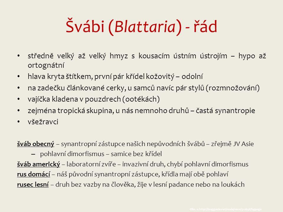 Obr.11: http://www.gymta.cz/kabinety/kab_biologie/videoatlas/hmyz/posvatky.html Obr.