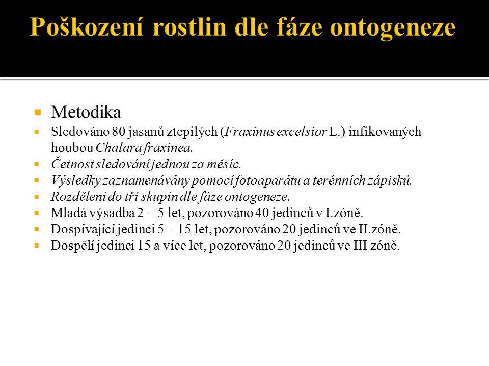  Metodika  Sledováno 80 jasanů ztepilých (Fraxinus excelsior L.) infikovaných houbou Chalara fraxinea.