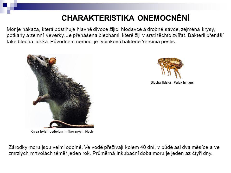 CHARAKTERISTIKA ONEMOCNĚNÍ Mor je nákaza, která postihuje hlavně divoce žijící hlodavce a drobné savce, zejména krysy, potkany a zemní veverky.