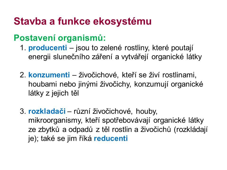Potravní řetězce Druhy potravních řetězců: Pastevně kořistnický začíná od zelených rostlin Rozkladný navazuje na pastevně kořistnický řetězec od odpadů a zbytků (živočichové žijící hlavně v půdě na dně nádrží – houby, bakterie, drobní živočichové) Tyto dva typy potravních řetězců jsou složitě propojeny do potravních sítí