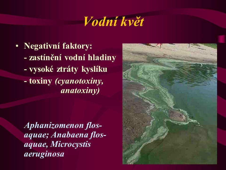 Vodní květ Negativní faktory: - zastínění vodní hladiny - vysoké ztráty kyslíku - toxiny (cyanotoxiny, anatoxiny) Aphanizomenon flos- aquae; Anabaena flos- aquae, Microcystis aeruginosa
