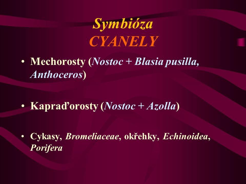 Symbióza CYANELY Mechorosty (Nostoc + Blasia pusilla, Anthoceros) Kapraďorosty (Nostoc + Azolla) Cykasy, Bromeliaceae, okřehky, Echinoidea, Porifera