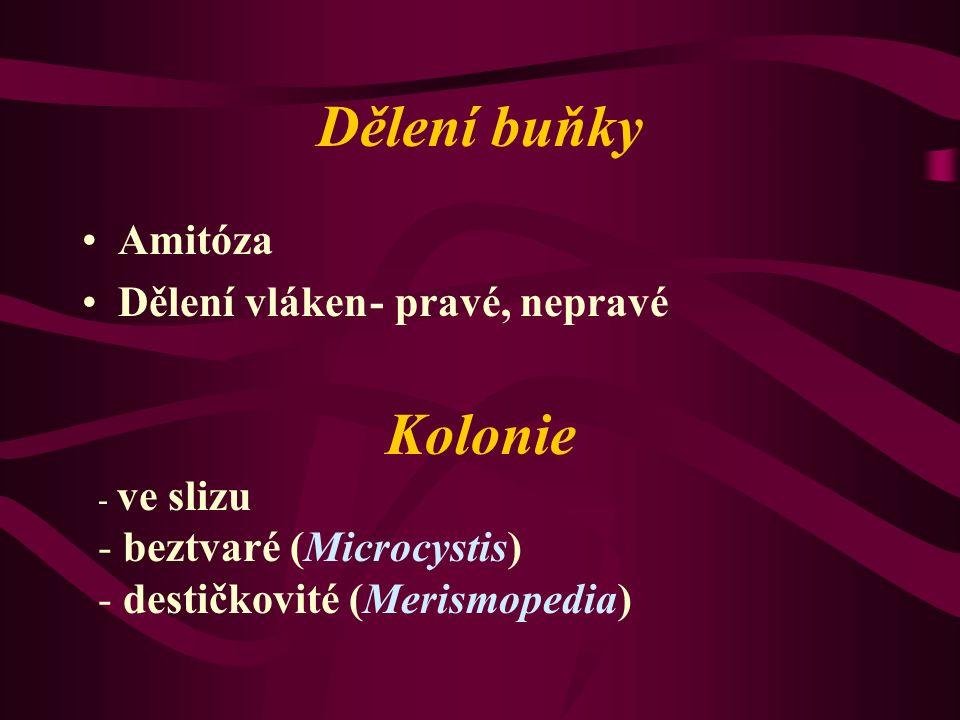 Dělení buňky Amitóza Dělení vláken- pravé, nepravé Kolonie - ve slizu - beztvaré (Microcystis) - destičkovité (Merismopedia)