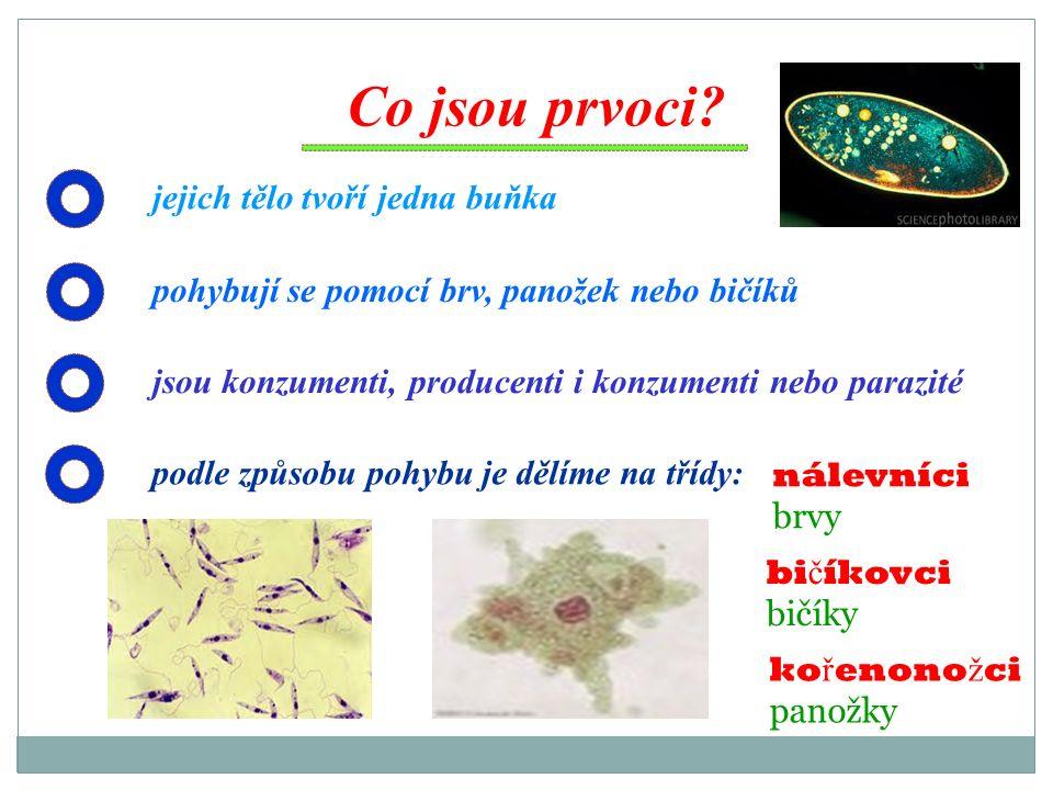 Co jsou prvoci? jejich tělo tvoří jedna buňka pohybují se pomocí brv, panožek nebo bičíků jsou konzumenti, producenti i konzumenti nebo parazité podle