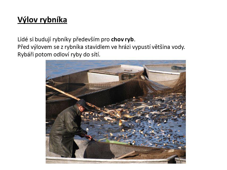 Výlov rybníka Lidé si budují rybníky především pro chov ryb.
