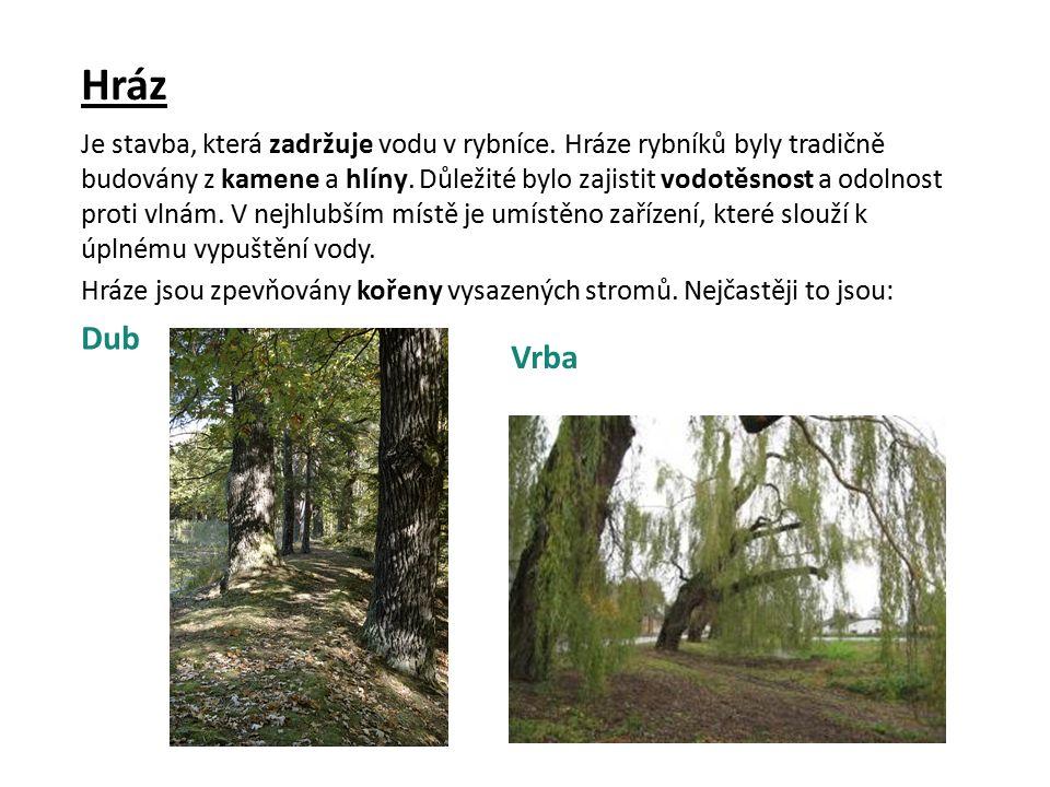 A teď trochu pátrání: Vezmi si na pomoc mapu ČR a najdi rybník Rožmberk.