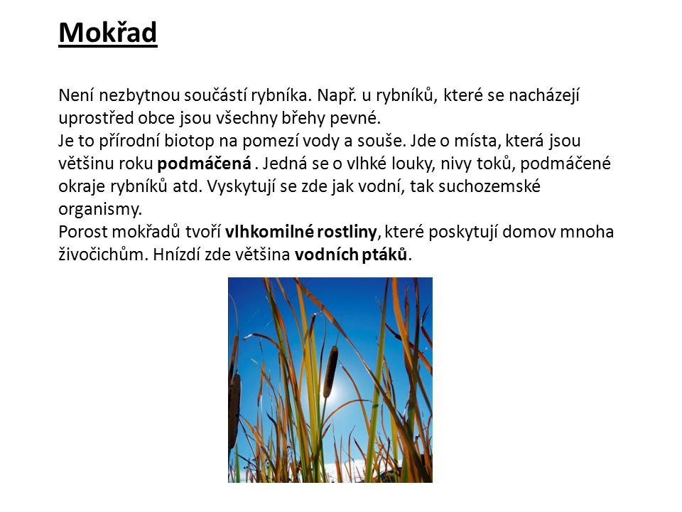 Řešení: Vezmi si na pomoc mapu ČR a najdi rybník Rožmberk.