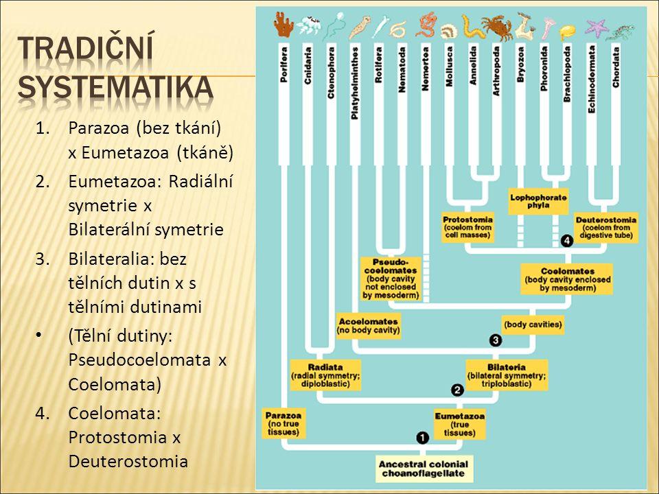1.Parazoa (bez tkání) x Eumetazoa (tkáně) 2.Eumetazoa: Radiální symetrie x Bilaterální symetrie 3.Bilateralia: bez tělních dutin x s tělními dutinami (Tělní dutiny: Pseudocoelomata x Coelomata) 4.Coelomata: Protostomia x Deuterostomia