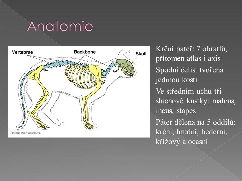 Krční páteř: 7 obratlů, přítomen atlas i axis Spodní čelist tvořena jedinou kostí Ve středním uchu tři sluchové kůstky: maleus, incus, stapes Páteř dělena na 5 oddílů: krční, hrudní, bederní, křížový a ocasní