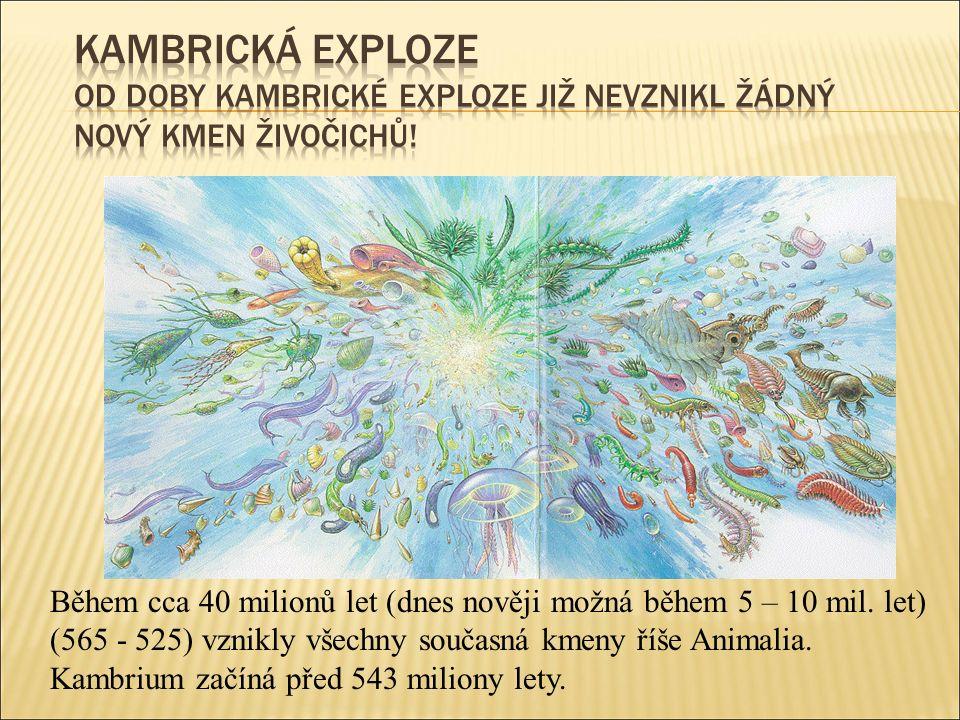 Během cca 40 milionů let (dnes nověji možná během 5 – 10 mil.
