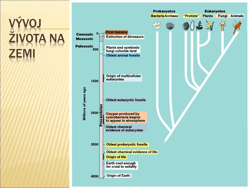  Chybí čelisti  U současných druhů neexistují párové ploutve  U fosilních druhů kostěná lebka, u recentních je celá kostra chrupavčitá.