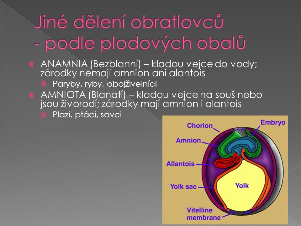  ANAMNIA (Bezblanní) – kladou vejce do vody; zárodky nemají amnion ani alantois  Paryby, ryby, obojživelníci  AMNIOTA (Blanatí) – kladou vejce na souš nebo jsou živorodí; zárodky mají amnion i alantois  Plazi, ptáci, savci