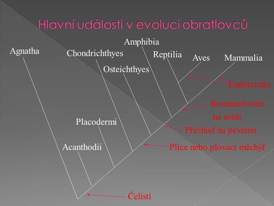 Agnatha Acanthodii Placodermi Chondrichthyes Osteichthyes Amphibia Reptilia AvesMammalia Čelisti Plíce nebo plovací měchýř Přechod na pevninu Rozmnožování na souši Endotermie