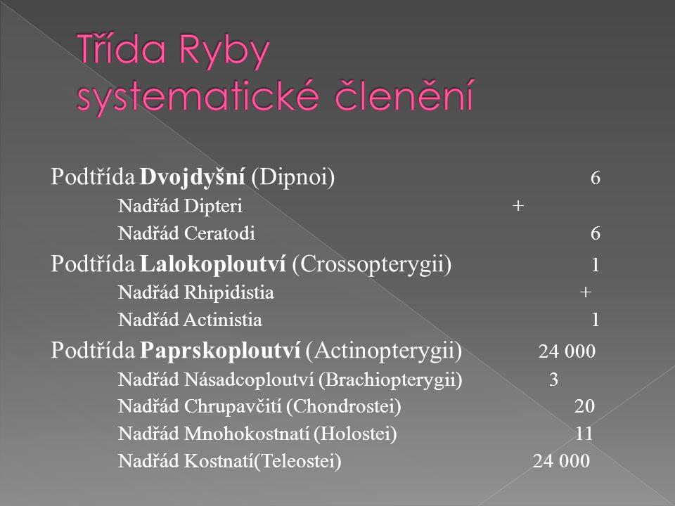 Podtřída Dvojdyšní (Dipnoi) 6 Nadřád Dipteri + Nadřád Ceratodi6 Podtřída Lalokoploutví (Crossopterygii) 1 Nadřád Rhipidistia + Nadřád Actinistia 1 Pod