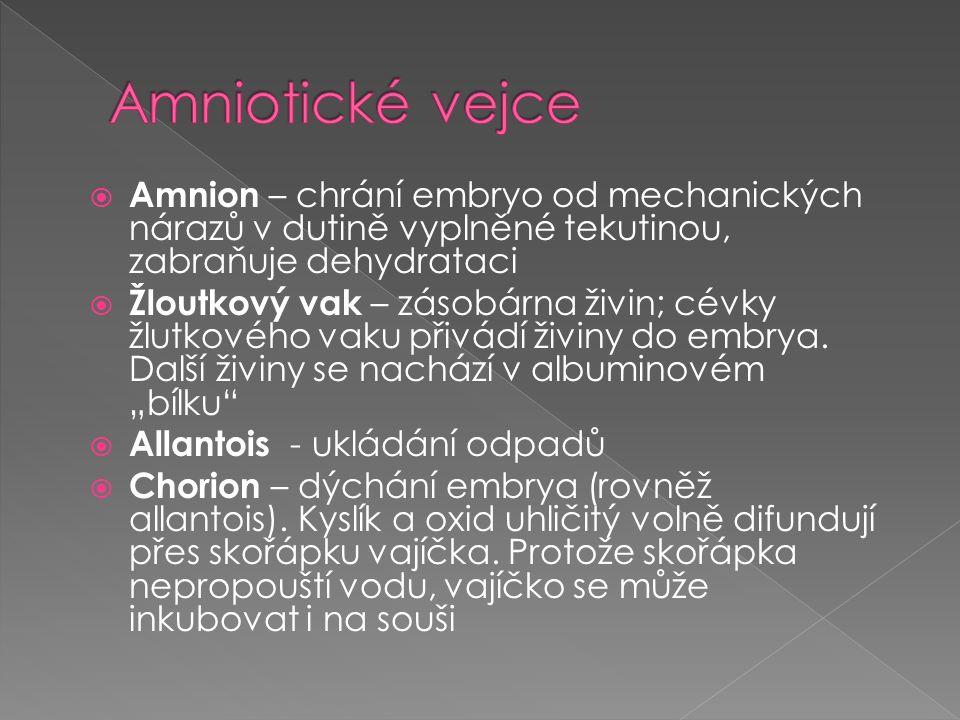  Amnion – chrání embryo od mechanických nárazů v dutině vyplněné tekutinou, zabraňuje dehydrataci  Žloutkový vak – zásobárna živin; cévky žlutkového vaku přivádí živiny do embrya.