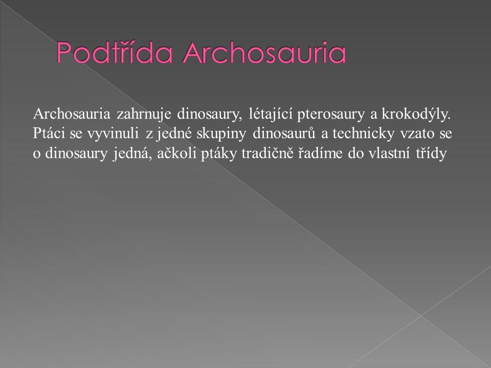 Archosauria zahrnuje dinosaury, létající pterosaury a krokodýly. Ptáci se vyvinuli z jedné skupiny dinosaurů a technicky vzato se o dinosaury jedná, a