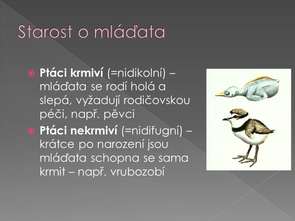  Ptáci krmiví (=nidikolní) – mláďata se rodí holá a slepá, vyžadují rodičovskou péči, např.