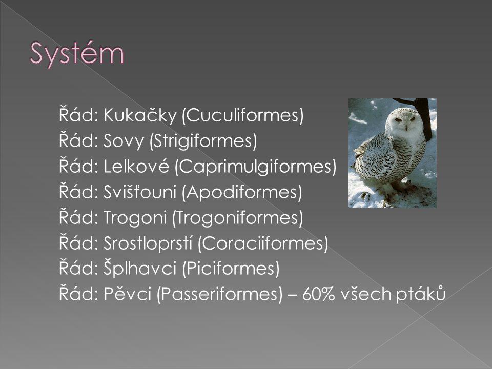 Řád: Kukačky (Cuculiformes) Řád: Sovy (Strigiformes) Řád: Lelkové (Caprimulgiformes) Řád: Svišťouni (Apodiformes) Řád: Trogoni (Trogoniformes) Řád: Srostloprstí (Coraciiformes) Řád: Šplhavci (Piciformes) Řád: Pěvci (Passeriformes) – 60% všech ptáků