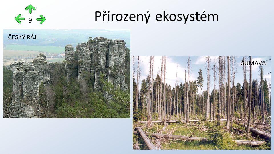 Přirozený ekosystém 9 ČESKÝ RÁJ ŠUMAVA