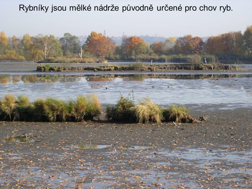 Rybníky jsou mělké nádrže původně určené pro chov ryb.