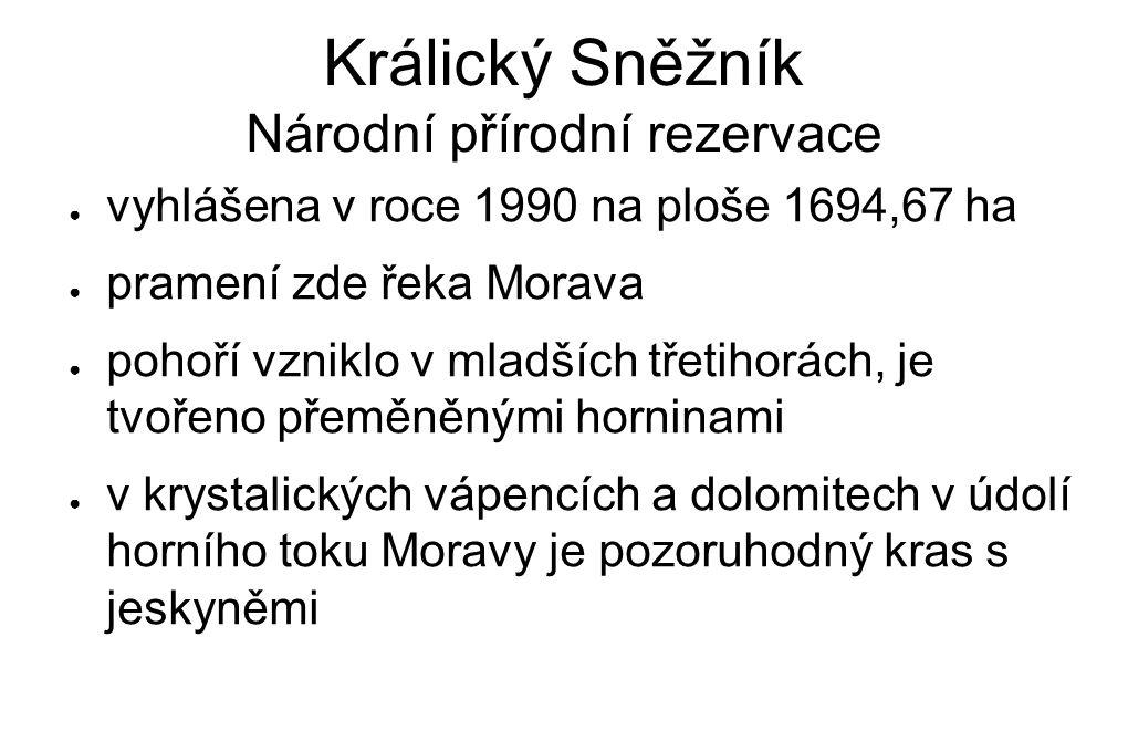 Králický Sněžník Národní přírodní rezervace ● vyhlášena v roce 1990 na ploše 1694,67 ha ● pramení zde řeka Morava ● pohoří vzniklo v mladších třetihor