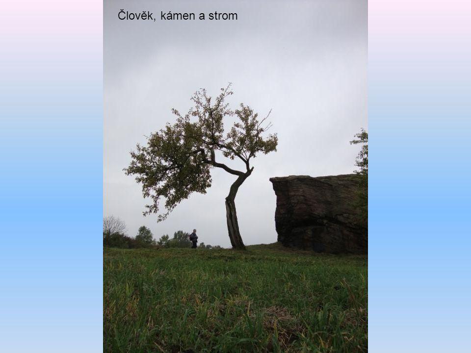 Člověk, kámen a strom