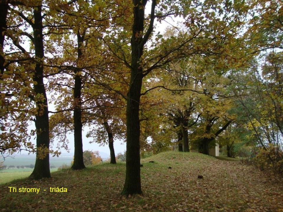 Tři stromy - triáda
