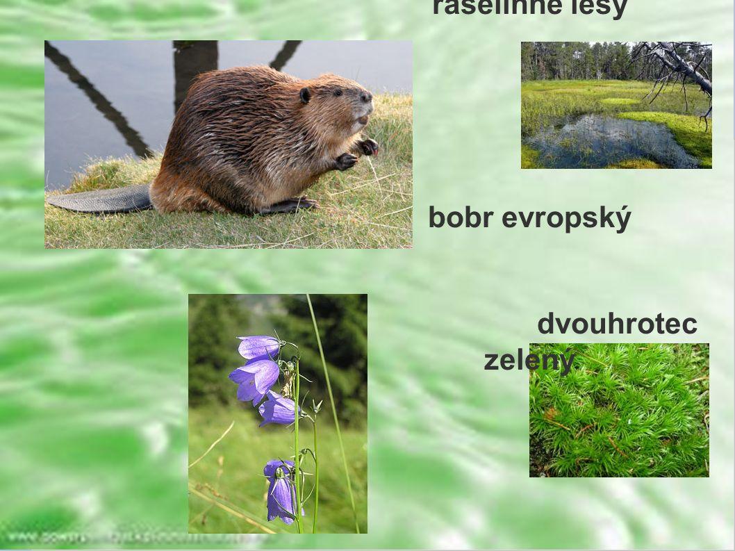 rašelinné lesy bobr evropský dvouhrotec zelený zvonek český