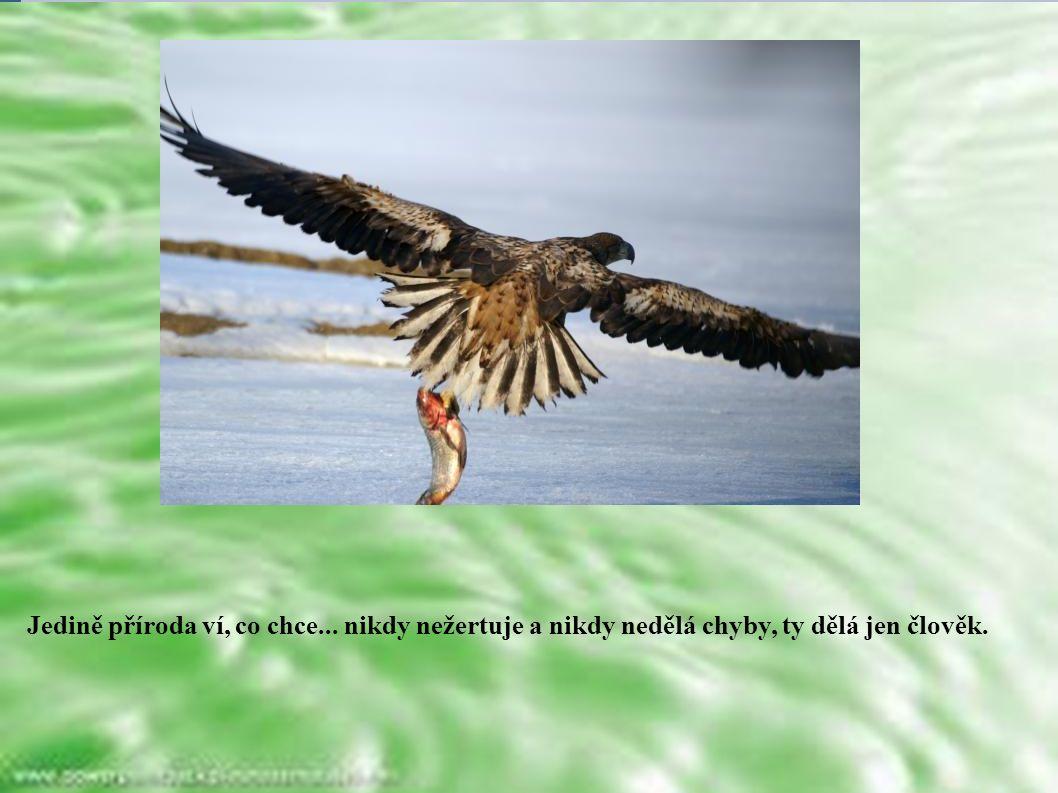Jedině příroda ví, co chce... nikdy nežertuje a nikdy nedělá chyby, ty dělá jen člověk.