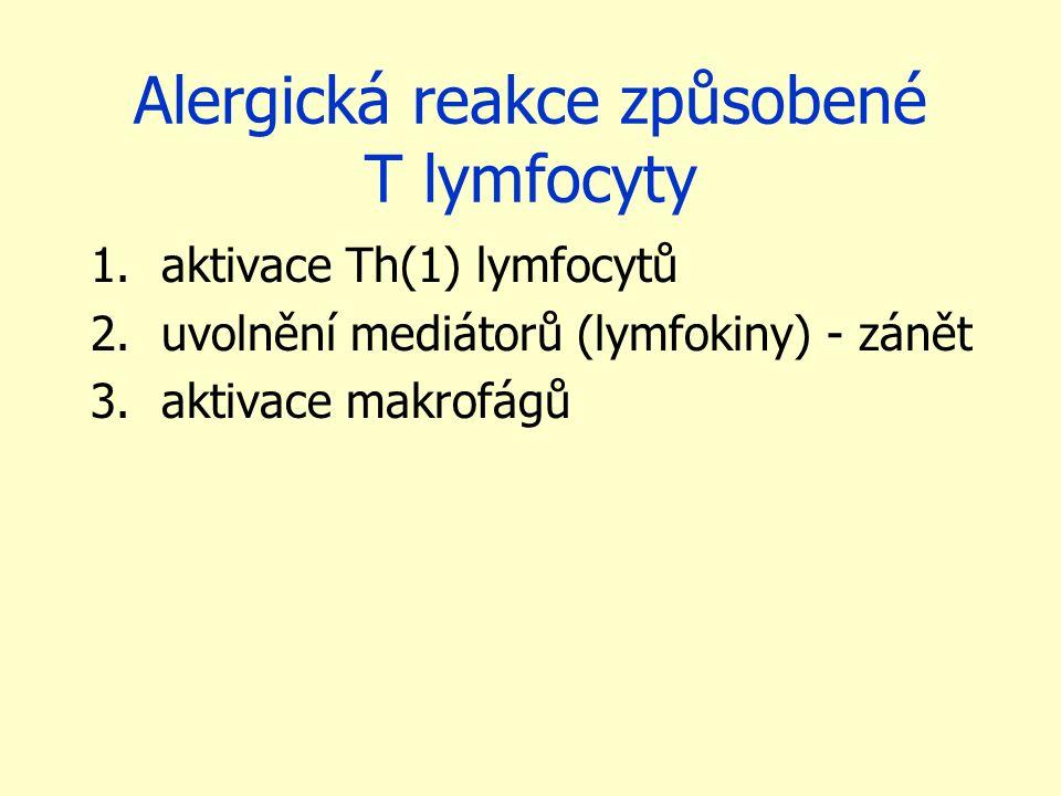 Alergická reakce způsobené T lymfocyty 1.aktivace Th(1) lymfocytů 2.uvolnění mediátorů (lymfokiny) - zánět 3.aktivace makrofágů