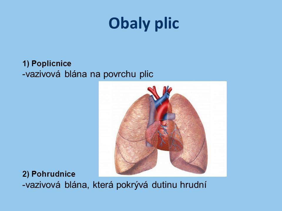 Obaly plic 1) Poplicnice -vazivová blána na povrchu plic 2) Pohrudnice -vazivová blána, která pokrývá dutinu hrudní