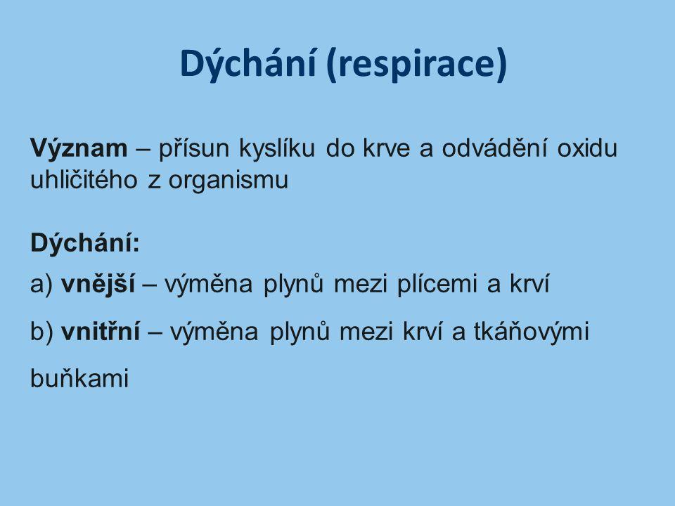 Dýchání (respirace) Význam – přísun kyslíku do krve a odvádění oxidu uhličitého z organismu Dýchání: a) vnější – výměna plynů mezi plícemi a krví b) v