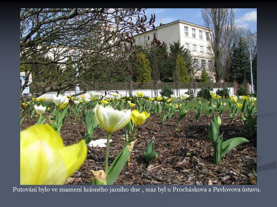 Putování bylo ve znamení krásného jarního dne, sraz byl u Procháskova a Pavlovova ústavu.