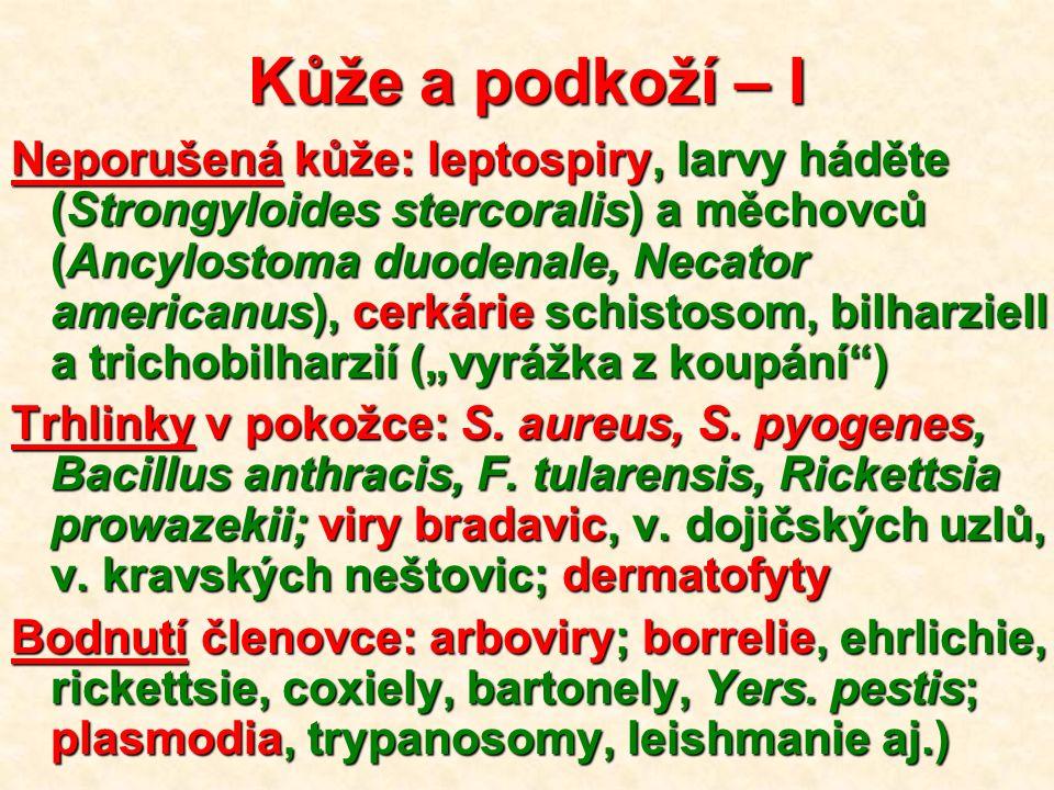 """Kůže a podkoží – I Neporušená kůže: leptospiry, larvy háděte (Strongyloides stercoralis) a měchovců (Ancylostoma duodenale, Necator americanus), cerkárie schistosom, bilharziell a trichobilharzií (""""vyrážka z koupání ) Trhlinky v pokožce: S."""