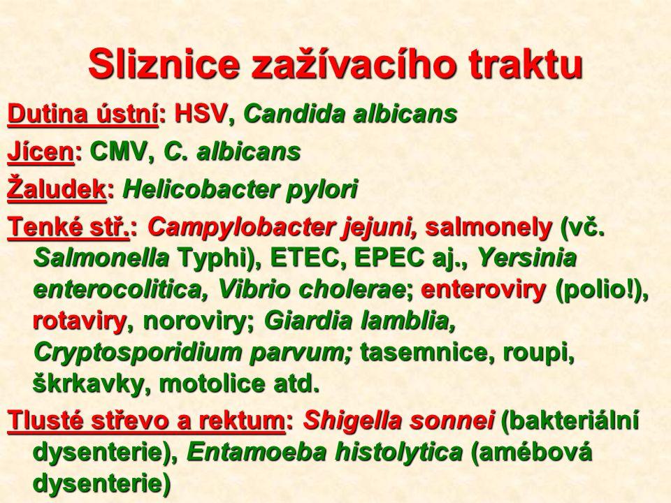 Sliznice zažívacího traktu Dutina ústní: HSV, Candida albicans Jícen: CMV, C.