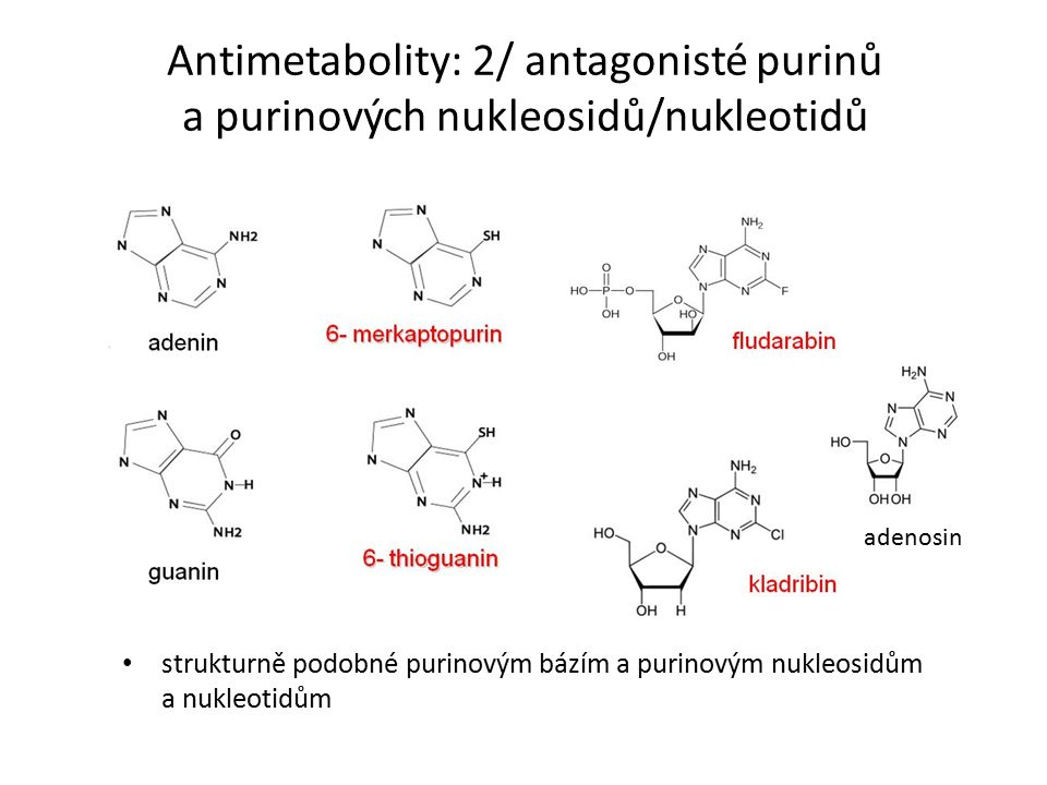 Antimetabolity: 2/ antagonisté purinů a purinových nukleosidů/nukleotidů strukturně podobné purinovým bázím a purinovým nukleosidům a nukleotidům adenosin
