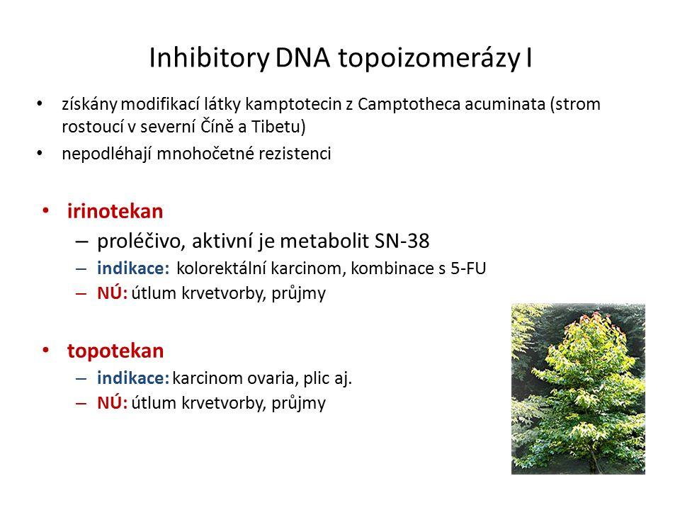 Inhibitory DNA topoizomerázy I získány modifikací látky kamptotecin z Camptotheca acuminata (strom rostoucí v severní Číně a Tibetu) nepodléhají mnohočetné rezistenci irinotekan – proléčivo, aktivní je metabolit SN-38 – indikace: kolorektální karcinom, kombinace s 5-FU – NÚ: útlum krvetvorby, průjmy topotekan – indikace: karcinom ovaria, plic aj.