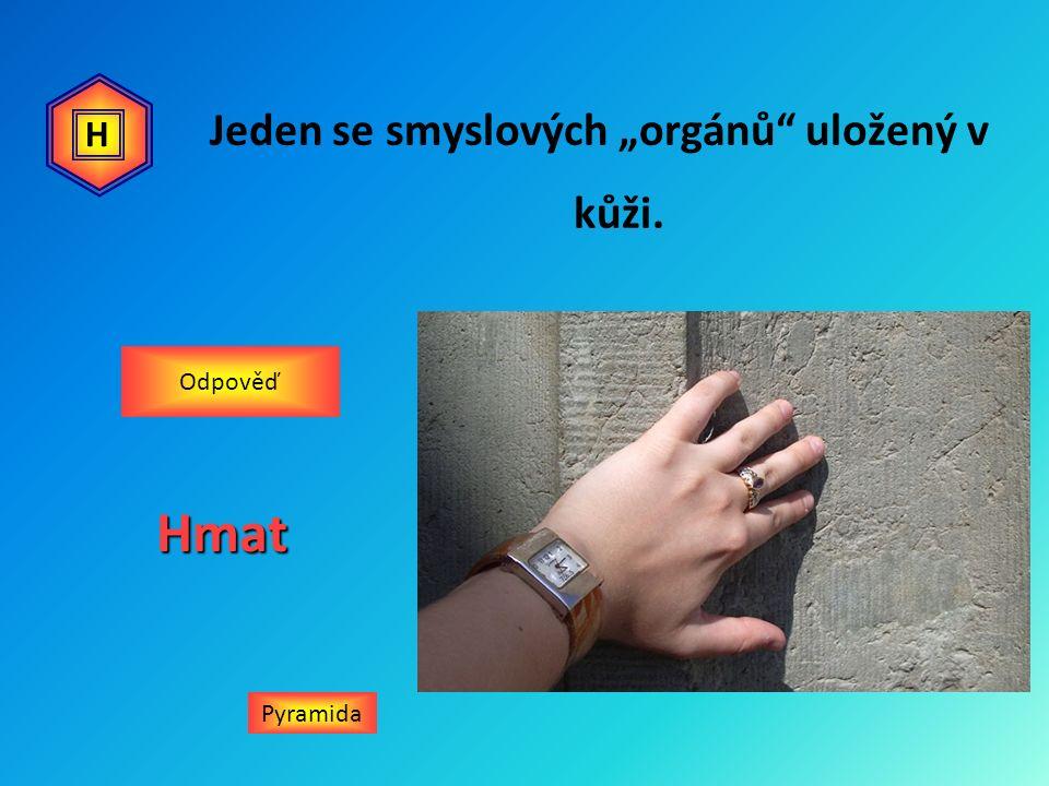 """Jeden se smyslových """"orgánů uložený v kůži. PyramidaHmat Odpověď H"""