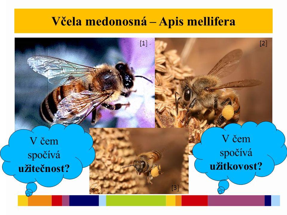 Včela medonosná – Apis mellifera [1 ] [2 ] [3 ] [5 ] [1 ] [2 ] [3 ] V čem spočívá užitečnost? V čem spočívá užitkovost?