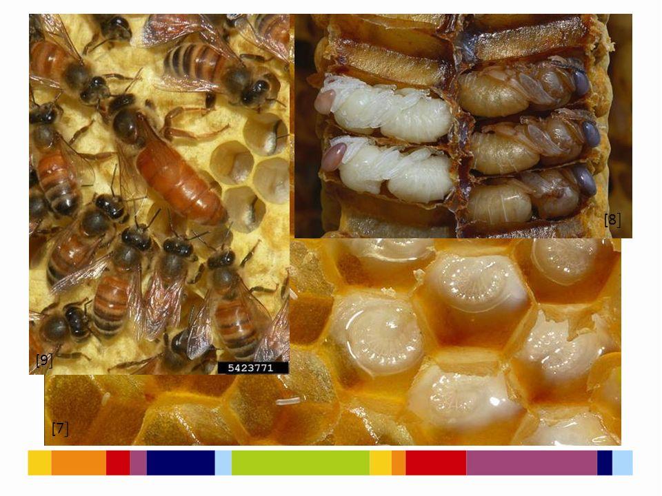 [1 ] [2 ] Jak si včely předávají informace? [10 ] [11 ]
