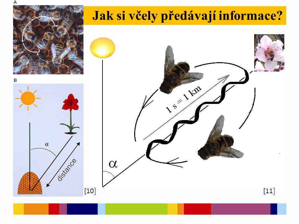[1 ] [2 ] Jak si včely předávají informace [10 ] [11 ]