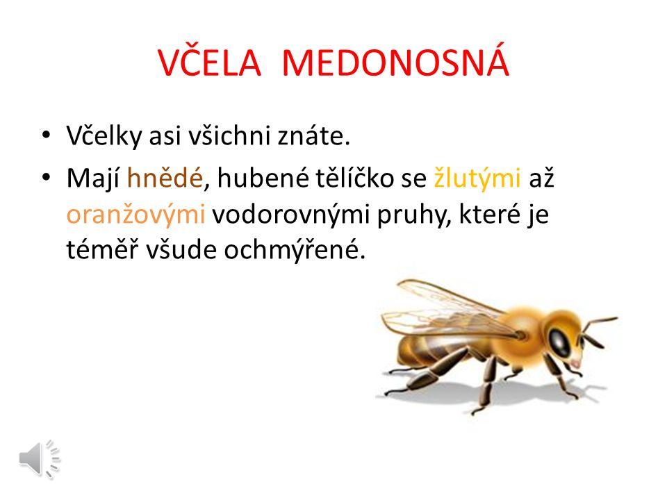 Název materiálu: VČELA- život,význam včel Vzdělávací oblast: Člověk a jeho svět Anotace: Žák se seznámí s včelou, včelím společenstvem.