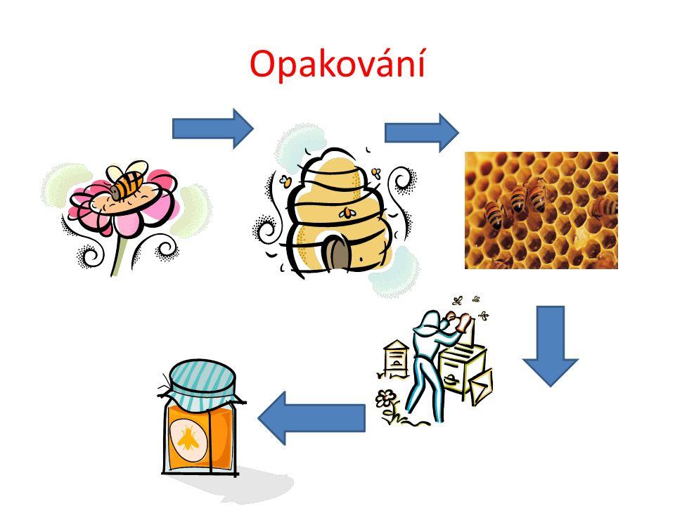 Včelí produkty med včelí vosk mateří kašička propolis
