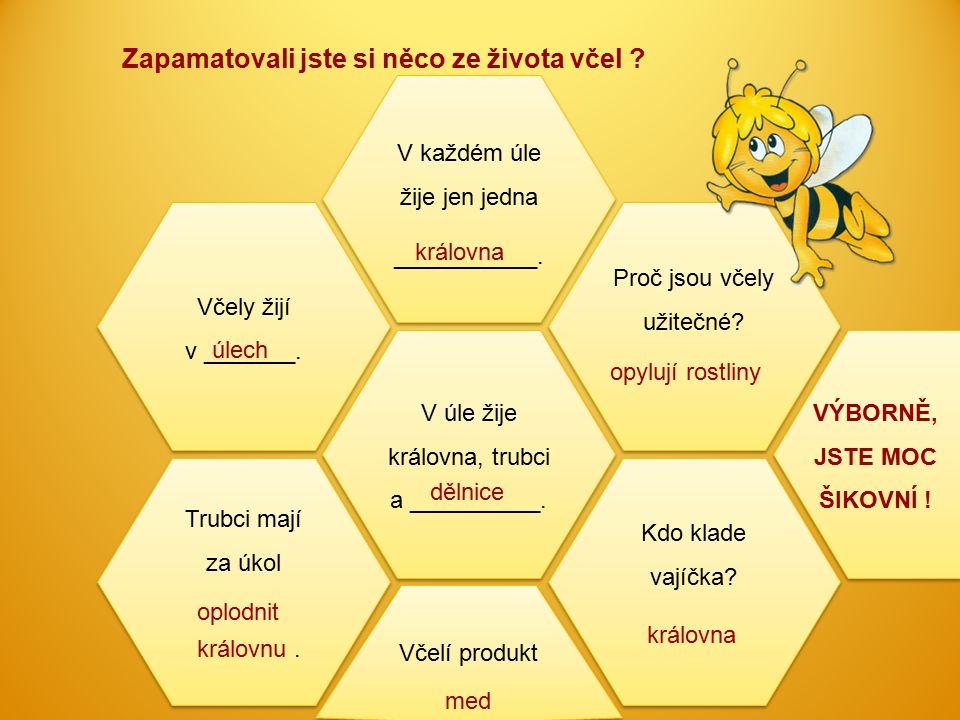 Zapamatovali jste si něco ze života včel ? Včely žijí v _______. Včely žijí v _______. V úle žije královna, trubci a __________. V každém úle žije jen