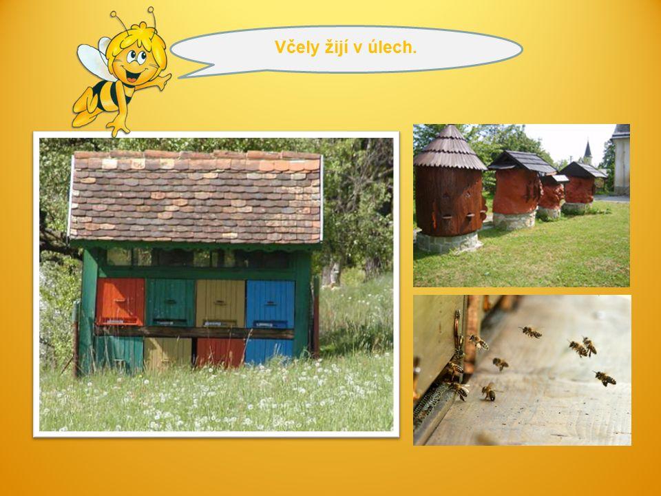 Mezi včelami funguje dokonalá dělba práce:  Královna - klade vajíčka do šestibokých komůrek,  Trubec – musí oplodnit mladé matky.