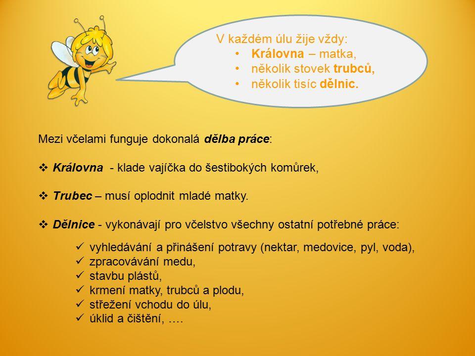 Mezi včelami funguje dokonalá dělba práce:  Královna - klade vajíčka do šestibokých komůrek,  Trubec – musí oplodnit mladé matky.  Dělnice - vykoná