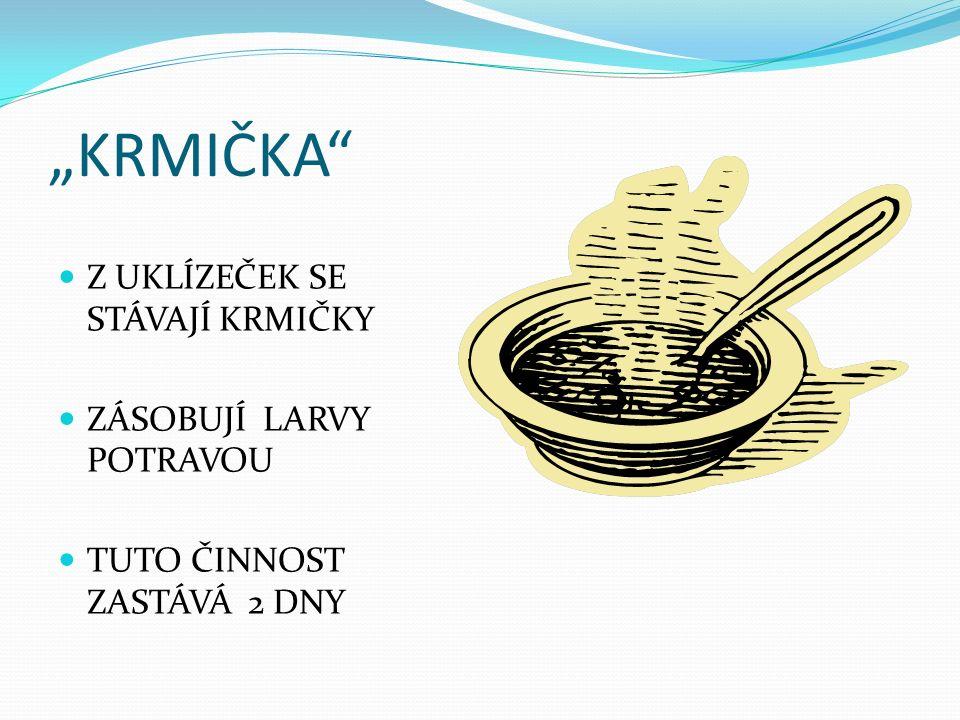 """""""KRMIČKA Z UKLÍZEČEK SE STÁVAJÍ KRMIČKY ZÁSOBUJÍ LARVY POTRAVOU TUTO ČINNOST ZASTÁVÁ 2 DNY"""