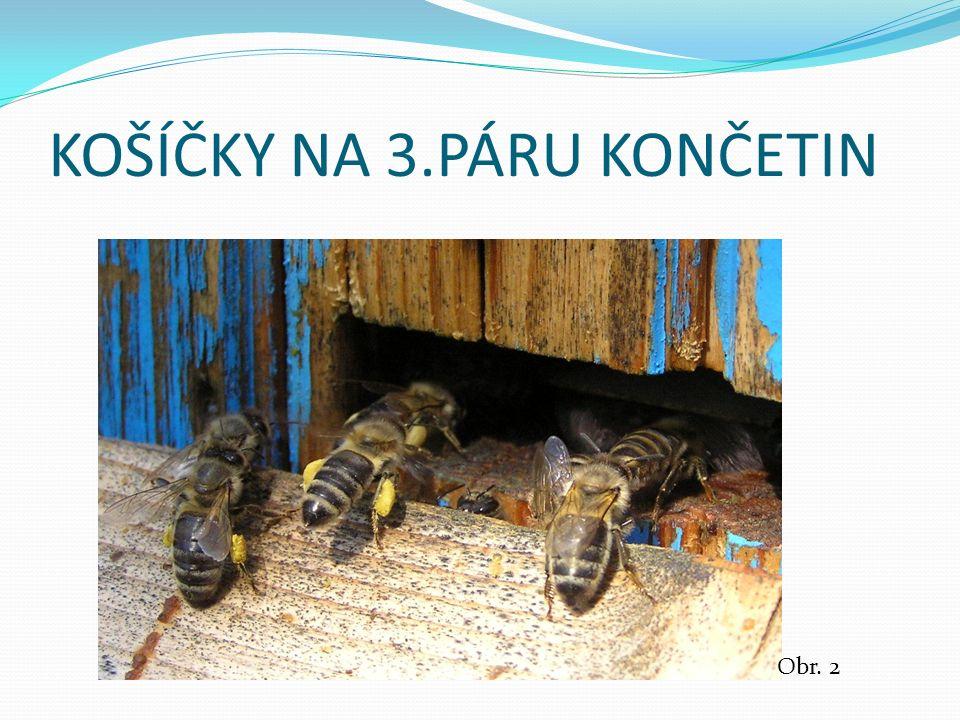 KOŠÍČKY NA 3.PÁRU KONČETIN Obr. 2